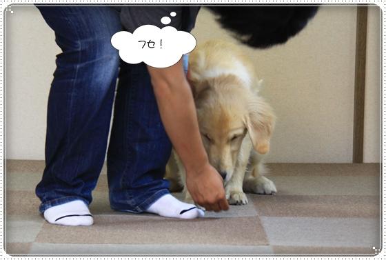 2012,7,4しつけ教室9