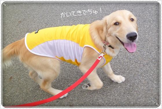 2012,7,5お散歩3