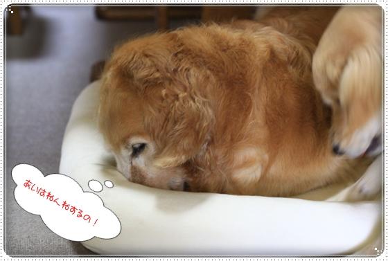 2012,7,7あちょぼ6