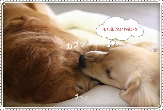 2012,7,7あちょぼ3