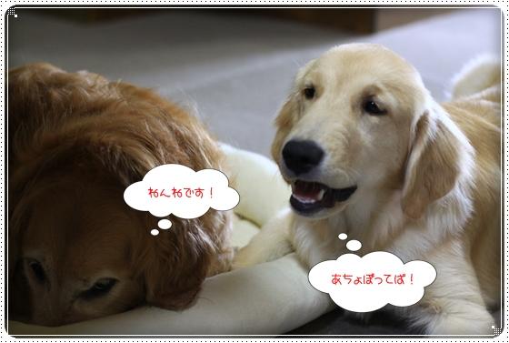 2012,7,7あちょぼ2