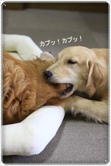 2012,7,7あちょぼ4