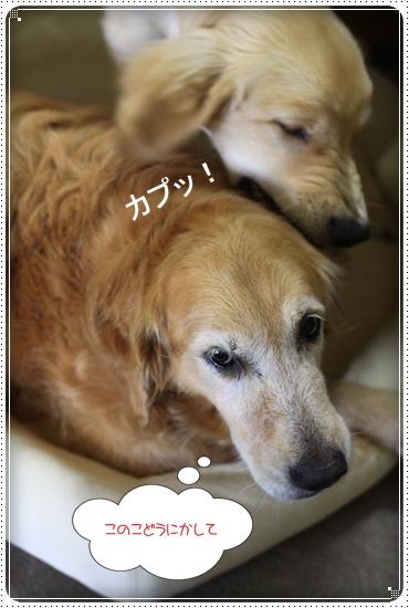 2012,7,7あちょぼ9