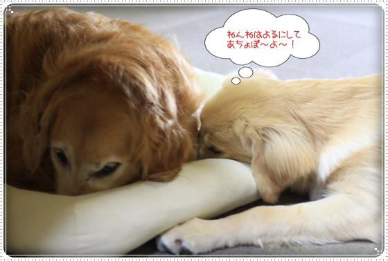 2012,7,7あちょぼ7