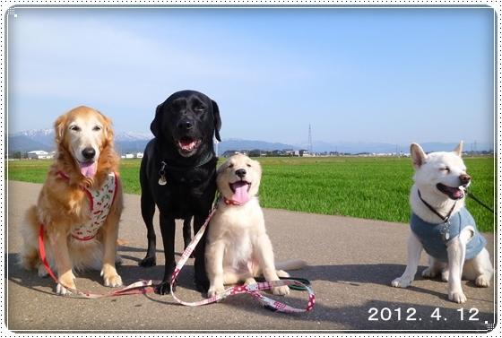 2012,7,12お散歩7