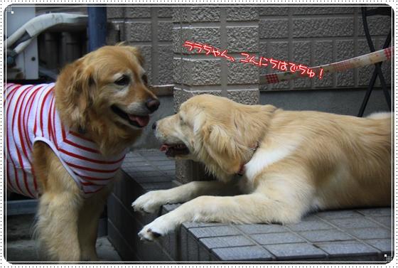 2012,7,14お庭遊び2