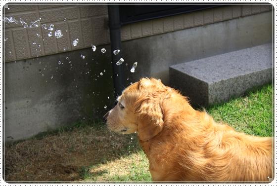 2012,7,16お庭遊び11