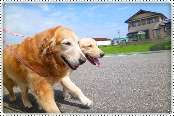 2012,7,20お散歩1