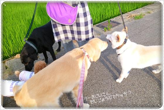 2012,7,23お散歩5