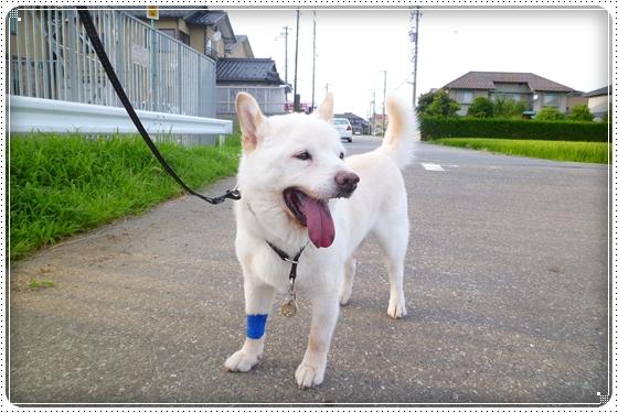 2012,7,23お散歩6