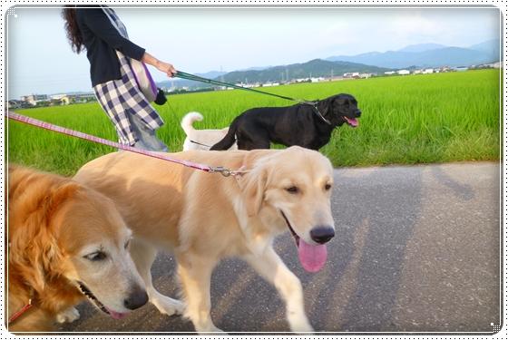 2012,7,23お散歩7