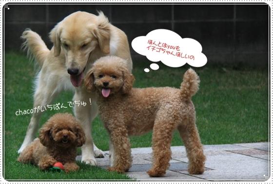 2012,7,30お庭遊び11