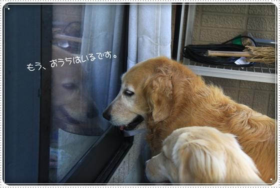 2012,8,5お庭遊び3