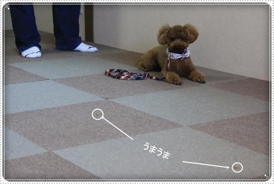 2012,8,8しつけ教室4