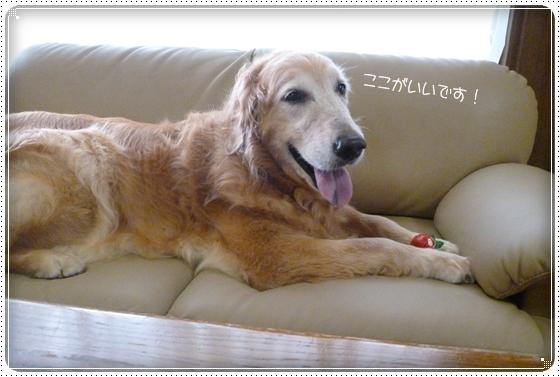 2012,8,15お庭遊び6