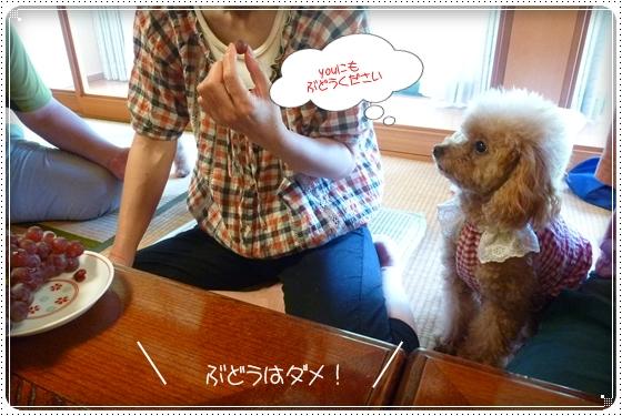 2012,8,19お里帰り5