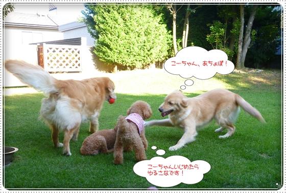 2012,8,19お里帰り8