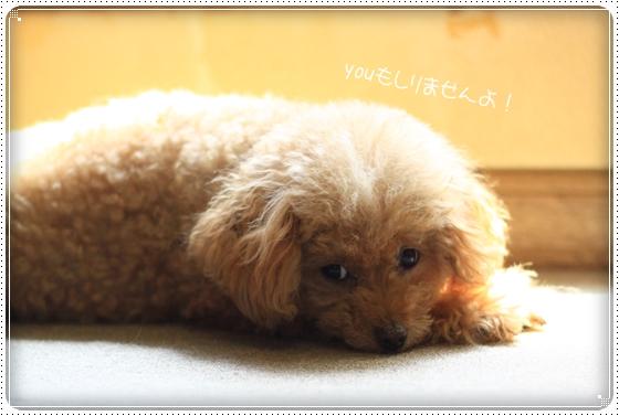 2012,8,23お散歩6