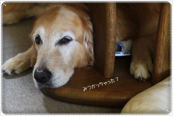 2012,8,23お散歩12