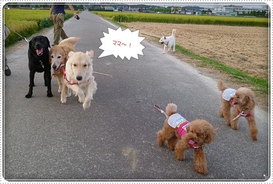 2012,8,27お散歩3