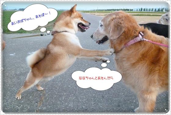 2012,8,27お散歩5