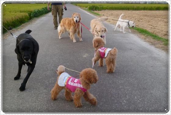 2012,8,27お散歩2