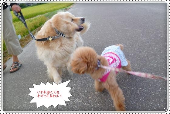 2012,8,29お散歩6