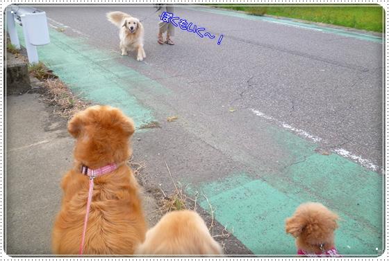 2012,8,29お散歩2