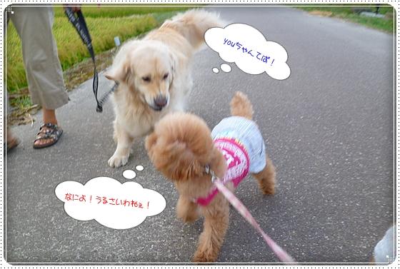 2012,8,29お散歩4