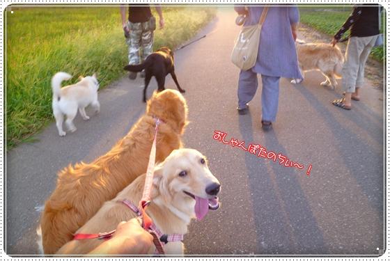 2012,8,29お散歩12