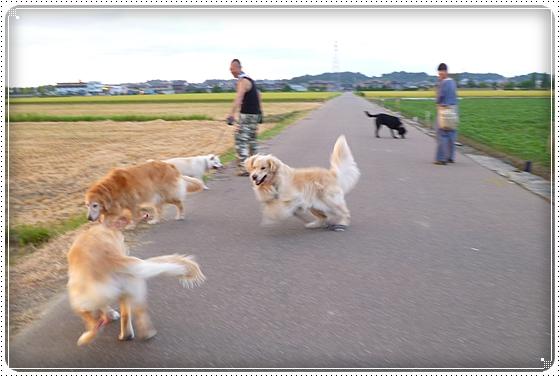 2012,8,29お散歩11