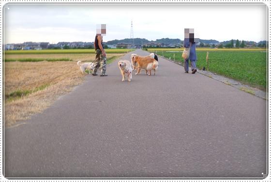2012,8,29お散歩10