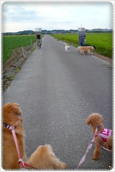 2012,8,29お散歩9