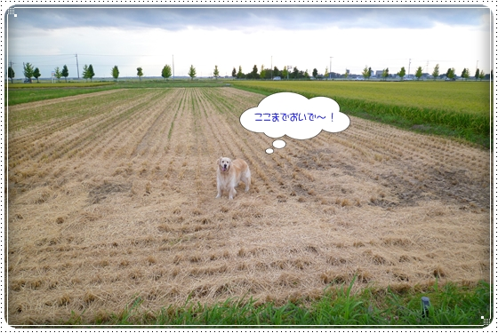 2012,8,29お散歩8