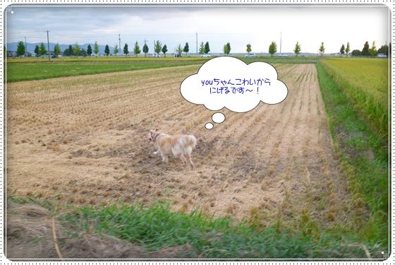 2012,8,29お散歩7