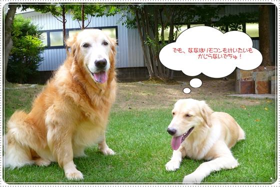 2012,8,30お庭遊び9