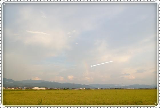 2012,8,30お庭遊び10