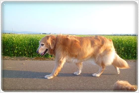 2012,9,13お散歩5