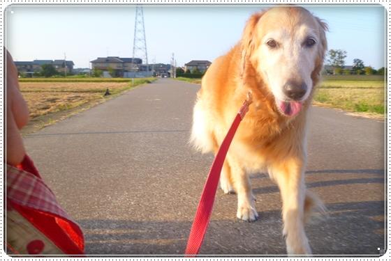 2012,9,13お散歩3