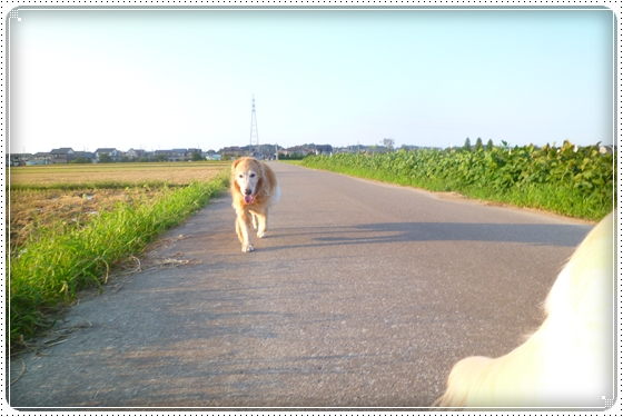 2012,9,13お散歩4