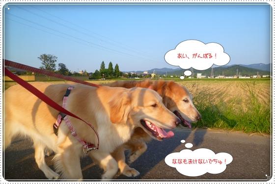 2012,9,13お散歩1