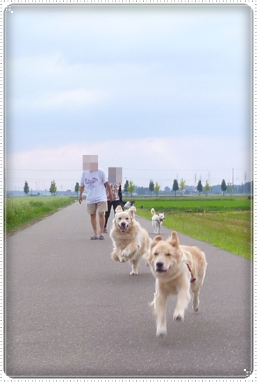 2012,9,20お散歩6
