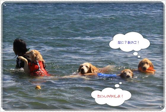 2012,9,26琵琶湖15