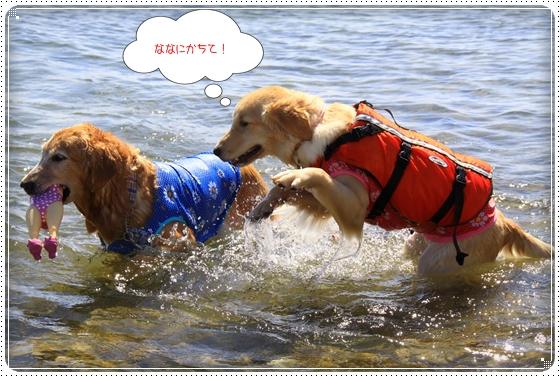 2012,9,26琵琶湖13
