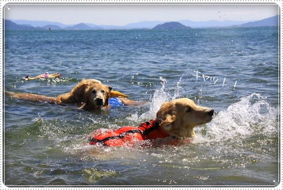 2012,9,27琵琶湖4