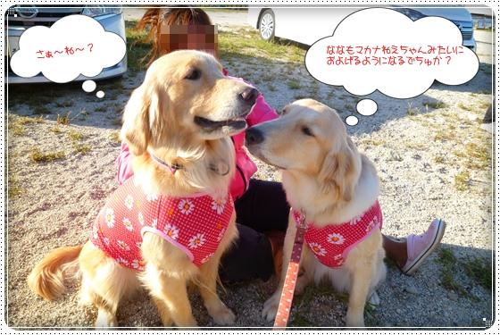 2012,9,27琵琶湖14