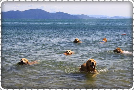 2012,9,27琵琶湖18