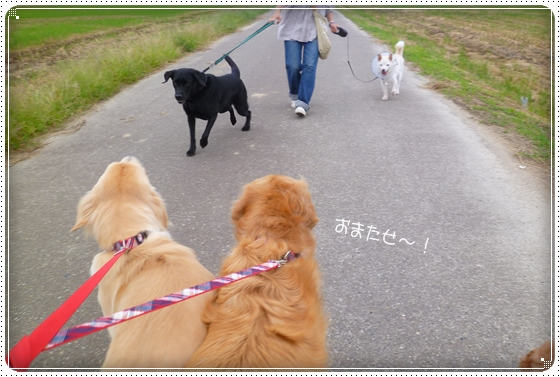 2012,9,29お散歩4