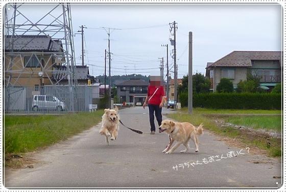 2012,9,29お散歩5