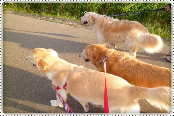 2012,10,4お散歩6